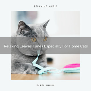 Relaxing Leaves Tunes Especially For Home Cats