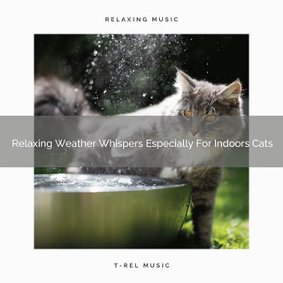 Relaxing Weather Whispers Especially For Indoors Cats