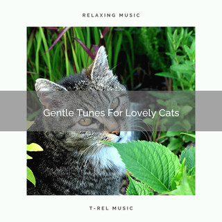 Gentle Tunes For Lovely Cats