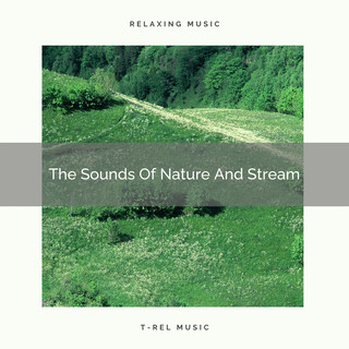 The Sounds Of Nature And Stream