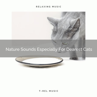 Nature Sounds Especially For Dearest Cats