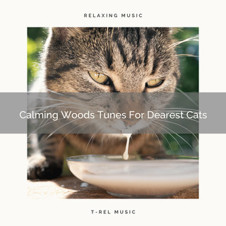 Calming Woods Tunes For Dearest Cats
