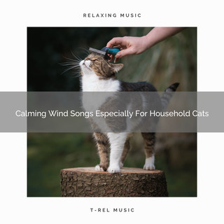 Calming Wind Songs Especially For Household Cats