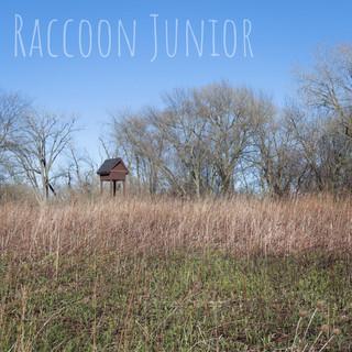 Raccoon Junior