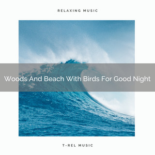 Woods And Beach With Birds For Good Night