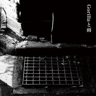 Gorilla與雨 (Western lowland gorilla Solo Version)