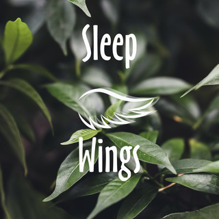 Sleep Wings