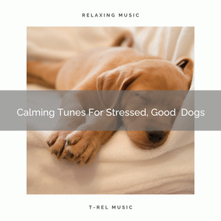 Calming Tunes For Stressed, Good Dogs