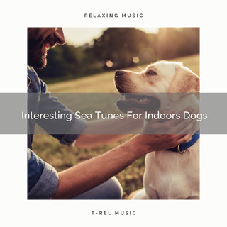 Interesting Sea Tunes For Indoors Dogs