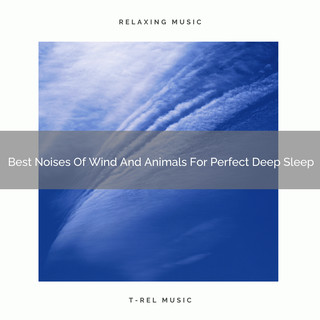 Best Noises Of Wind And Animals For Perfect Deep Sleep