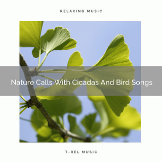 Nature Calls With Cicadas And Bird Songs