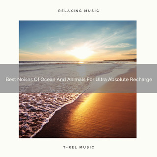 Best Noises Of Ocean And Animals For Ultra Absolute Recharge