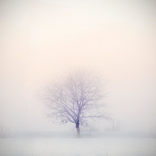 Infinite White Out:Snowstorm, Blizzard, Arctic Wind
