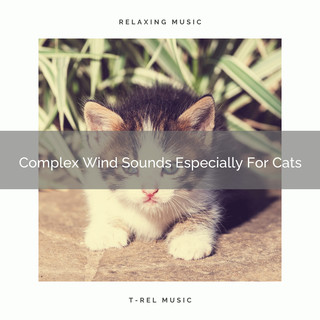 Complex Wind Sounds Especially For Cats