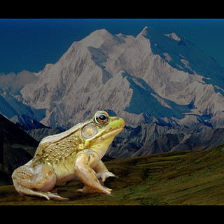 Journey Of The Heroic Frog