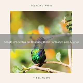 Sonidos Perfectos Del Bosque Y Ruido Fantastico Para Suenos