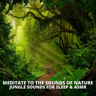 Jungle Sounds For Sleep & ASMR