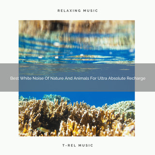 Best White Noise Of Nature And Animals For Ultra Absolute Recharge