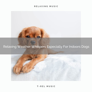 Relaxing Weather Whispers Especially For Indoors Dogs
