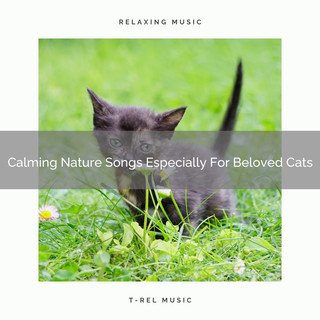 Calming Nature Songs Especially For Beloved Cats