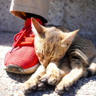Sessiones Para Relajar Tu Perrito Cuando Sales, Sleeping And Relaxing Music For Dogs And Cats, Session 15