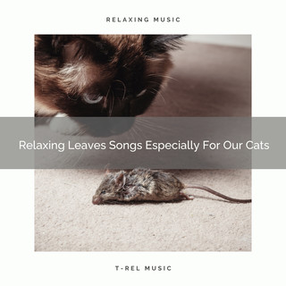 Relaxing Leaves Songs Especially For Our Cats