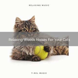 Relaxing Woods Noises For Your Cats