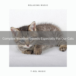 Complex Weather Sounds Especially For Our Cats