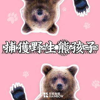 捕獲野生熊孩子 - 現場版