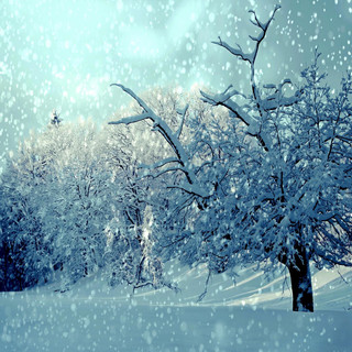 Sweet Sound Of Falling Snowflakes