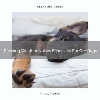 Relaxing Weather Noises Especially For Our Dogs