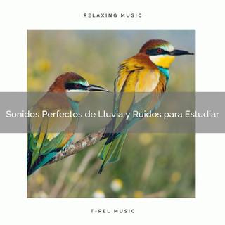 Sonidos Perfectos De Lluvia Y Ruidos Para Estudiar