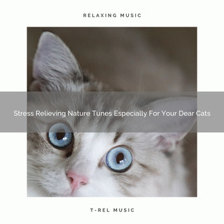 Stress Relieving Nature Tunes Especially For Your Dear Cats