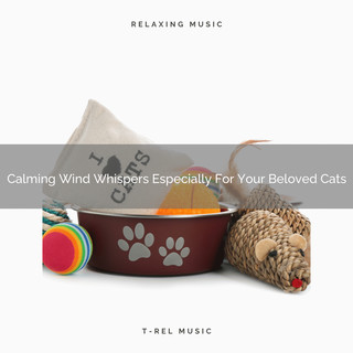 Calming Wind Whispers Especially For Your Beloved Cats