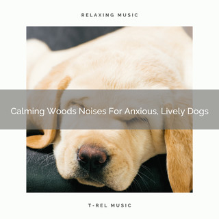 Calming Woods Noises For Anxious, Lively Dogs