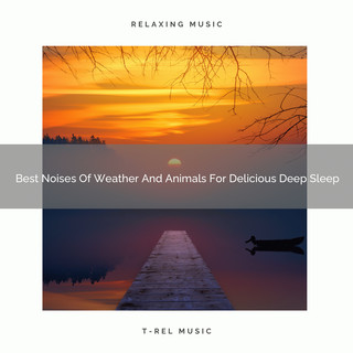 Best Noises Of Weather And Animals For Delicious Deep Sleep