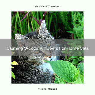 Calming Woods Whispers For Home Cats