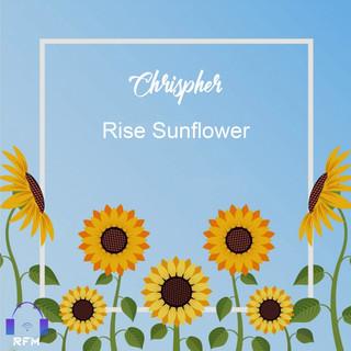 Rise Sunflower