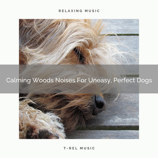 Calming Woods Noises For Uneasy, Perfect Dogs