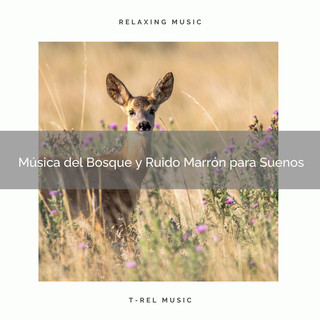 Música Del Bosque Y Ruido Marrón Para Suenos