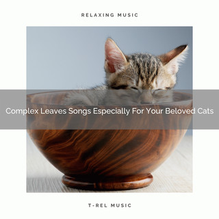 Complex Leaves Songs Especially For Your Beloved Cats