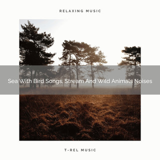 Sea With Bird Songs, Stream And Wild Animals Noises