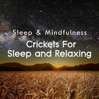 Crickets For Sleep And Relaxing (Sleep & Mindfulness)