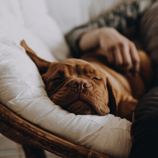 For Pets Ears:Soothing Music For Pets With Anxiety