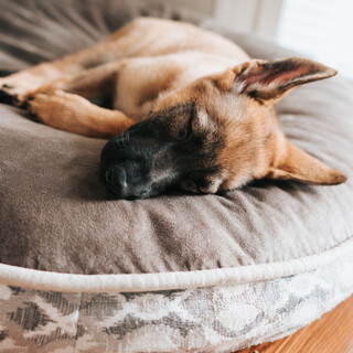 For Pets Ears:Relaxing Sounds For Pet Relaxation