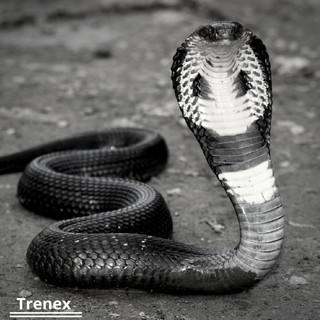 Nagin Dance (Snake Music)
