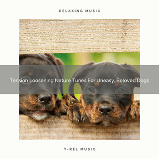 Tension Loosening Nature Tunes For Uneasy, Beloved Dogs