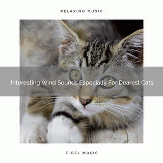 Interesting Wind Sounds Especially For Dearest Cats
