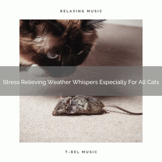 Stress Relieving Weather Whispers Especially For All Cats