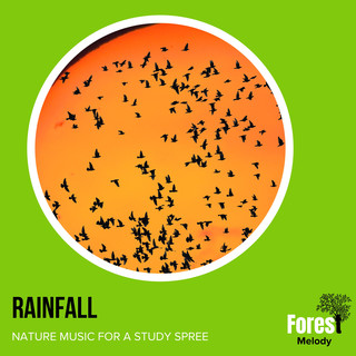Rainfall - Nature Music For A Study Spree